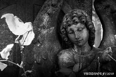 Statue of Angel - Streatham Cemetery