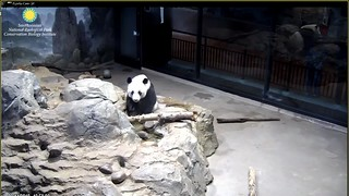 Mama says I must take a baff befowe I see a pwetty panda giwl (specially on Valentimes day) because no one likes smelly panda boys.