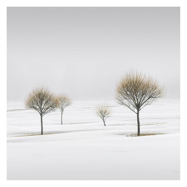 Winter Poetry II