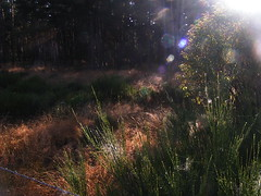 20080907 31687 1008 Jakobus Licht Wald Ginster - Photo of La Chaze-de-Peyre