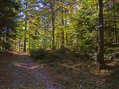 Le chemin en contrebas du Eichelkopf - Photo of Salenthal