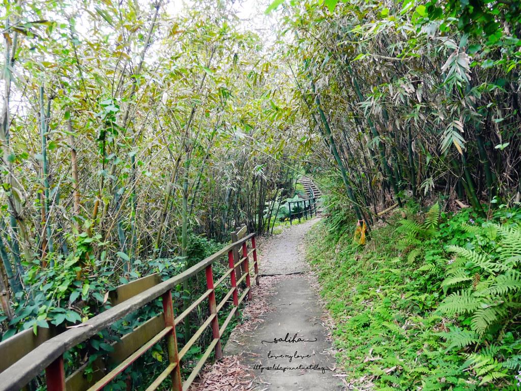 台北貓空一日遊爬山景點樟湖步道 (3)