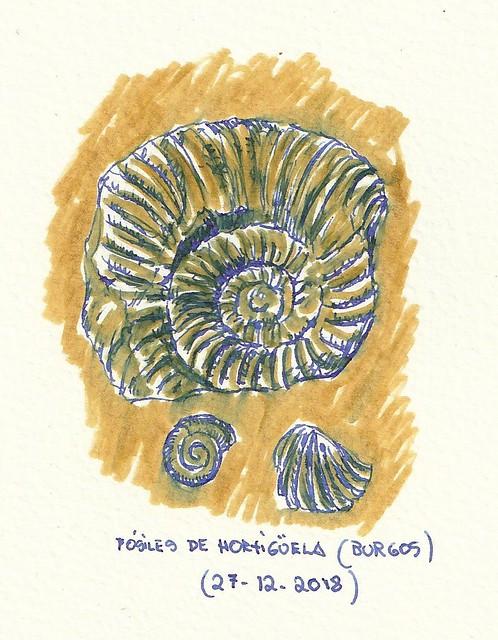 Hortigüela (Burgos). Fósiles