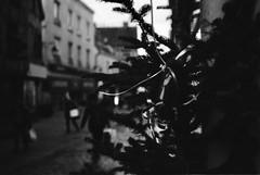 Christmas tree - Photo of Gy-l'Évêque