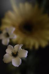 Spring Silks