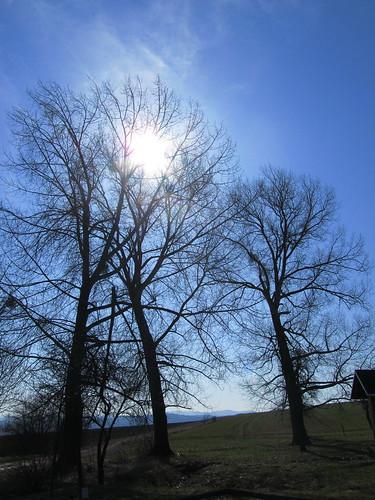 20110321 0208 127 Jakobus Bäume Sonne Schattenriss