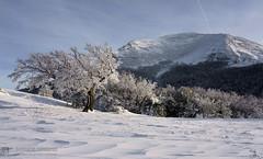 VALLI RIO FREDDO, ACQUAFREDDA e PIAN DELLE MACINARE in invernale (monte Cucco)