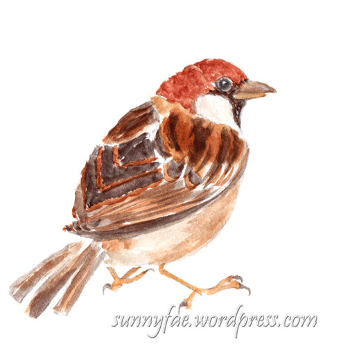 watercolour sketch of a sparrow on the ground