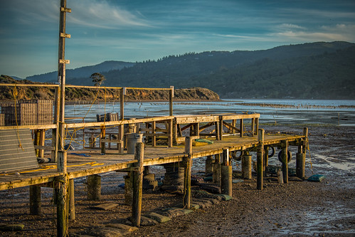 Tamales Oyster Pier in Low Tide
