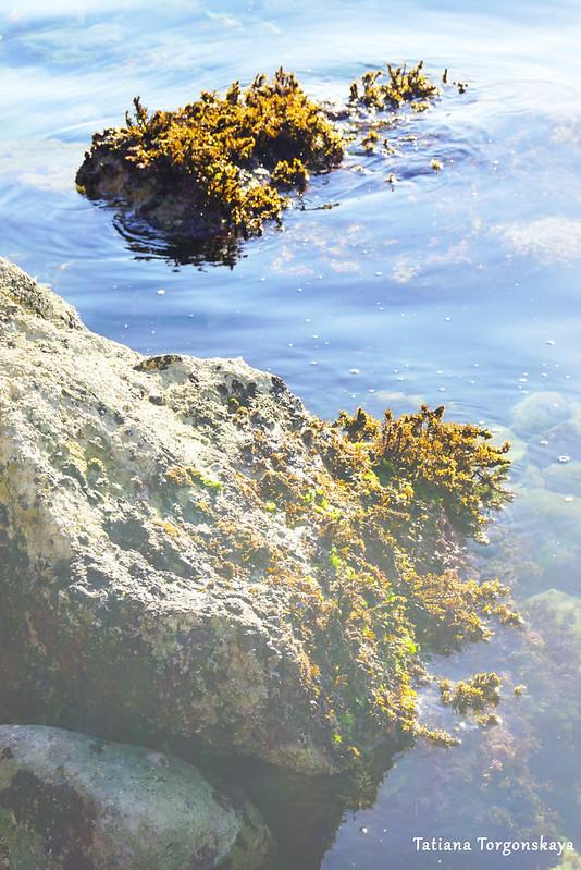 Камни в водах Адриатики