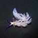 Blue Dragon (Pteraeolidia semperi) nudibranch by Robin Agarwal (ANudibranchMom on iNaturalist)