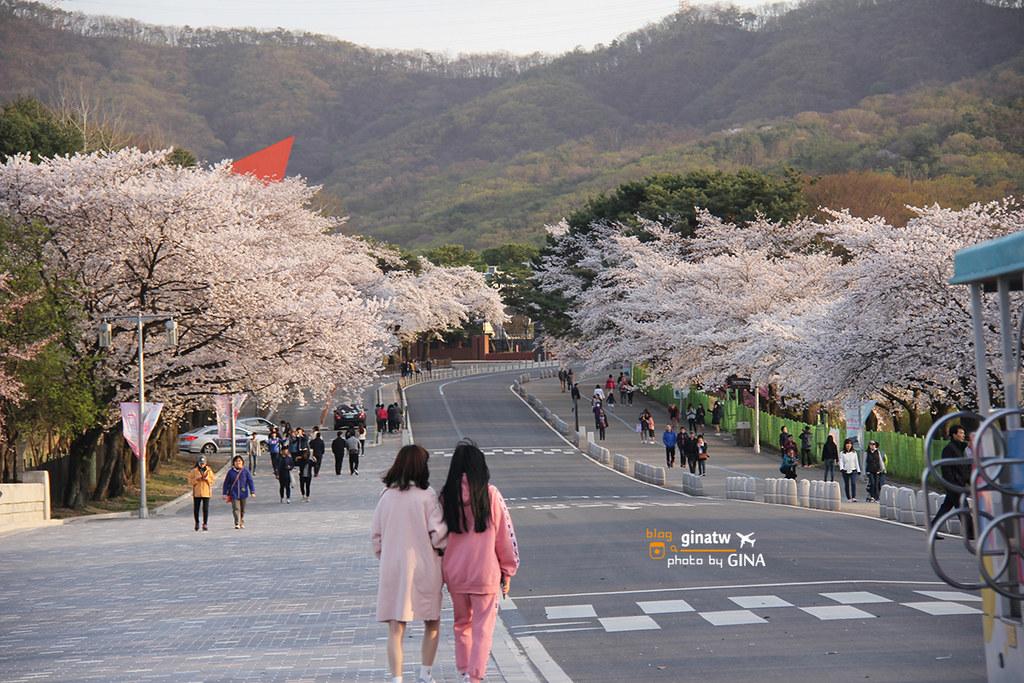 【首爾大公園】韓國賞櫻|果川市滿滿的櫻花路,超好拍超美! @GINA LIN