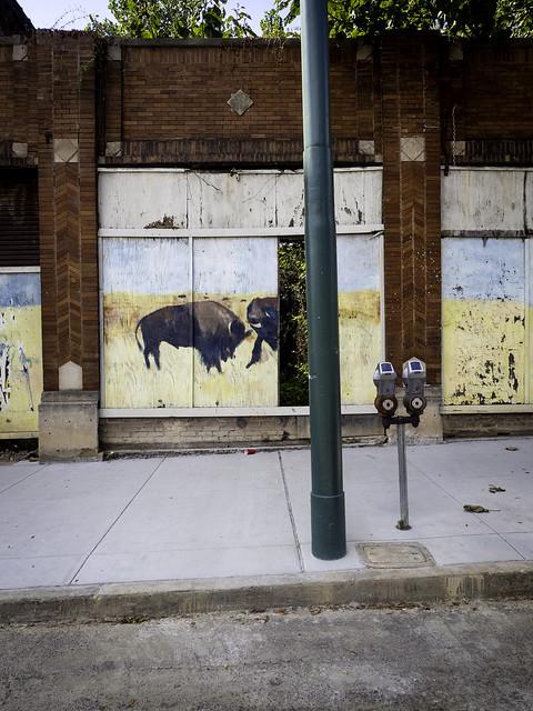 buffalo03