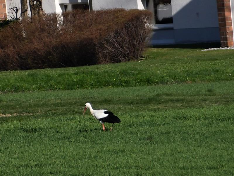 Stork 28.03 (1)