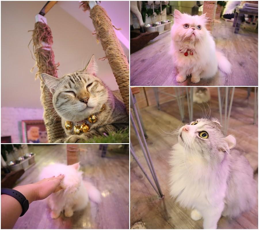Caturday cat cafe (38)