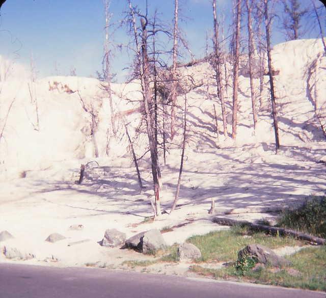 Yellowstone National Park - August 1980.