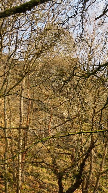 Broadmoor Common (east)