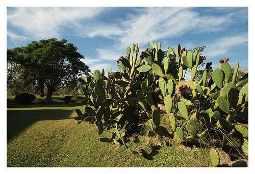 San Antonio de Areco 19-04-10-7089