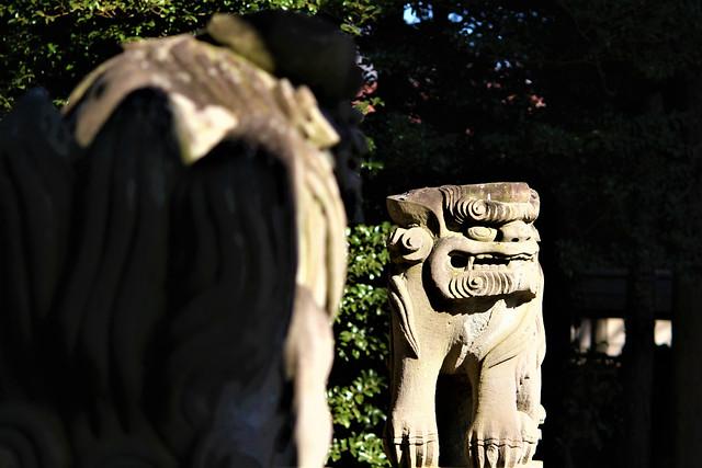 hirayanagihoshinomiyajinja026