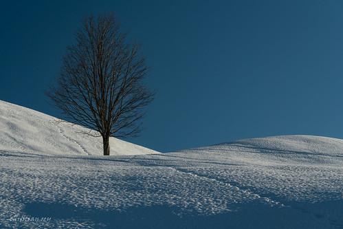 Un arbre perdu dans la neige