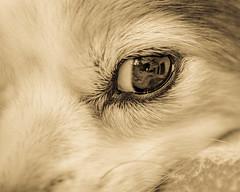 Eye of mystery