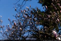 Magnolias (2019)
