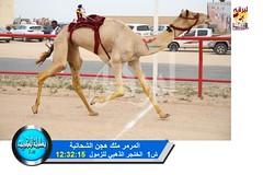 📷 صور سباق الحيل والزمول (الأشواط المفتوحة والعامة) ختامي الكويت مساء 14-2-2019