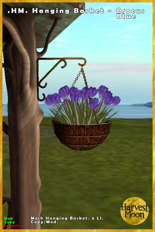 Harvest Moon – Hanging Basket – Crocus Blue