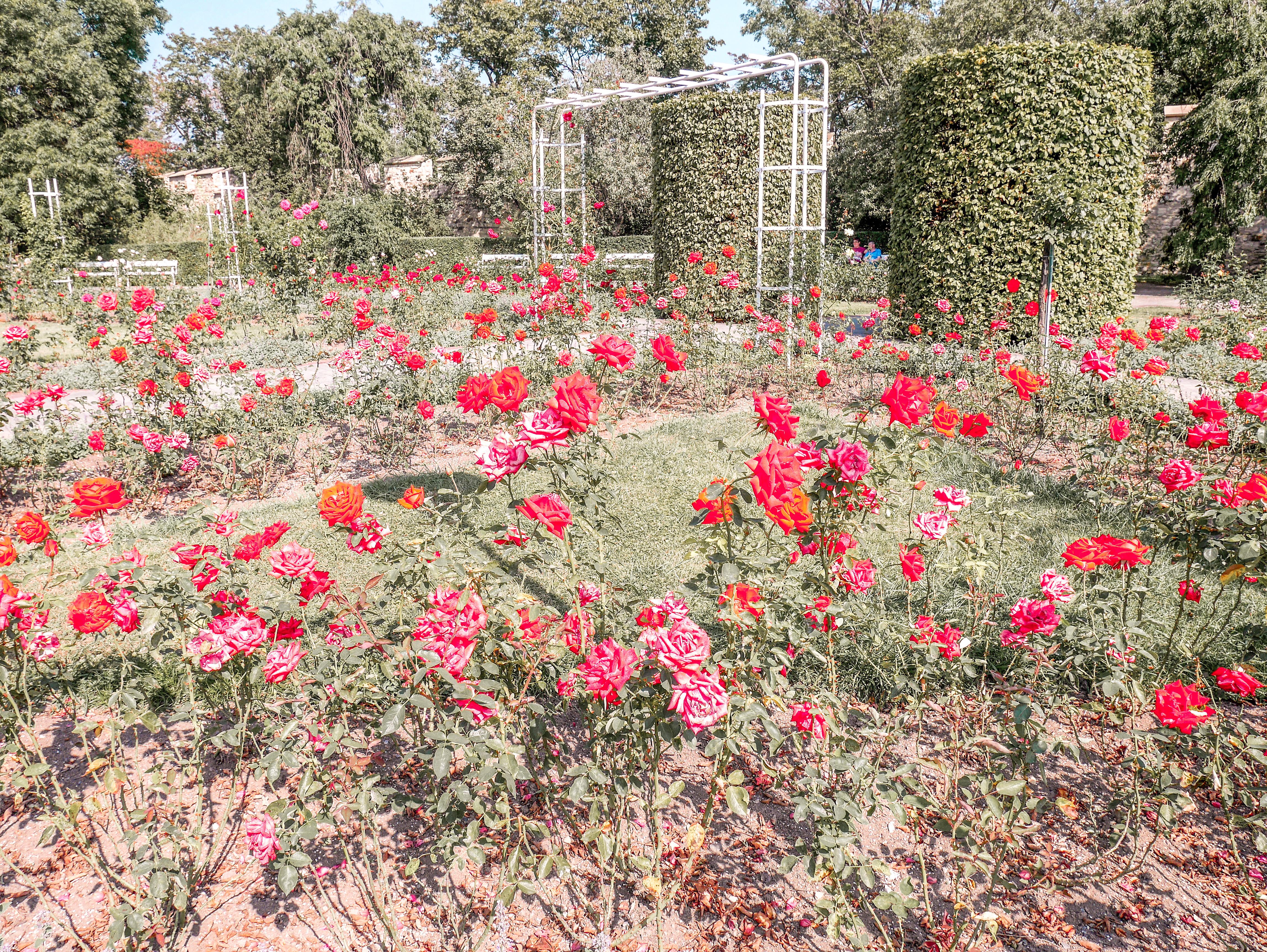 Petrinin kukkula ruusutarha