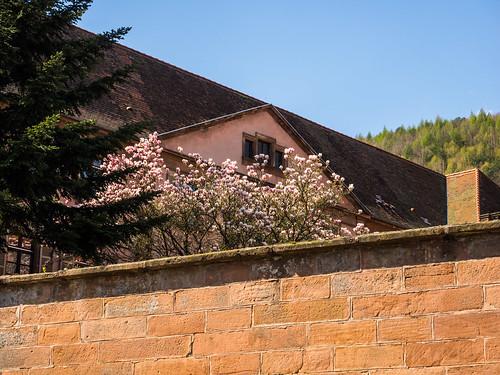 Kloster Oberbronn