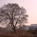 Defiant tree