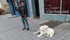 The 'Dog Walk' isn't going so well... - Brooklyn, NYC