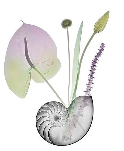 Vase or vessel