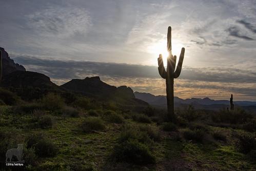 desert cactus sun