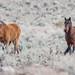 So. Meadows Mustang