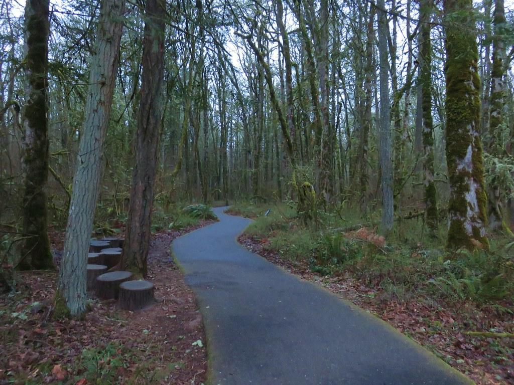 Vine Maple Trail