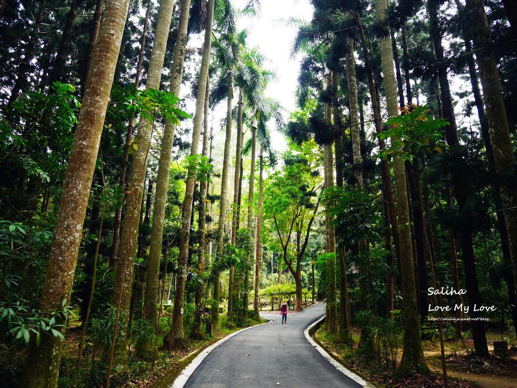 嘉義市區一日遊景點行程推薦嘉義公園植物園射日塔 (6)