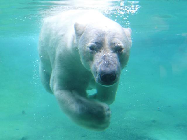 Zoo Rostock - 10.11.18