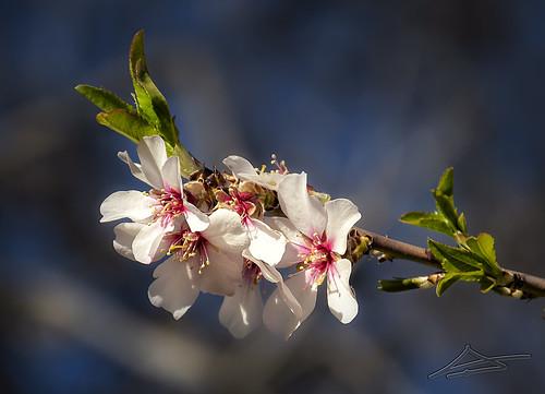 Llega la Primavera 2