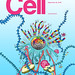 CELL_175_1.c1.indd