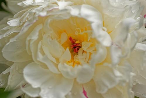 Sous les jupons blancs - Under white petticoats