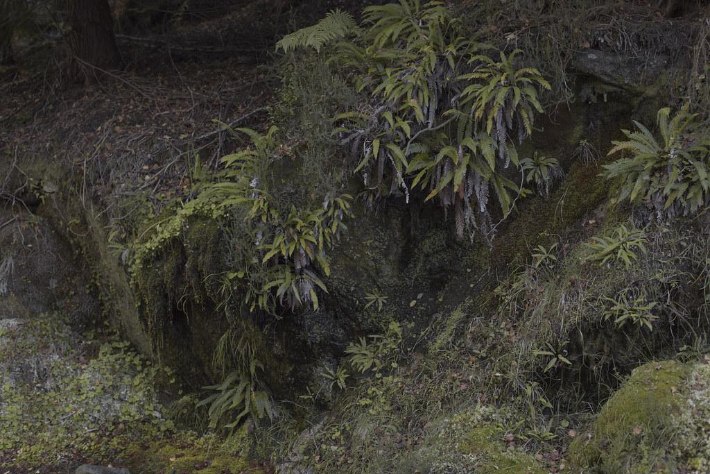 Geres_floresta_3