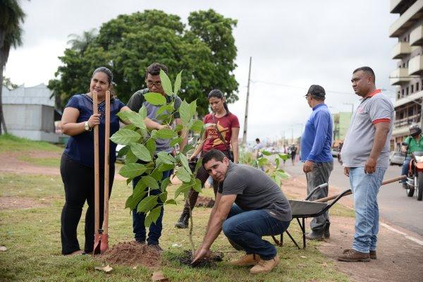 Área externa do Parque da Cidade, em Santarém, ganha plantio de ipês rosa, Parque da Cidade: entorno