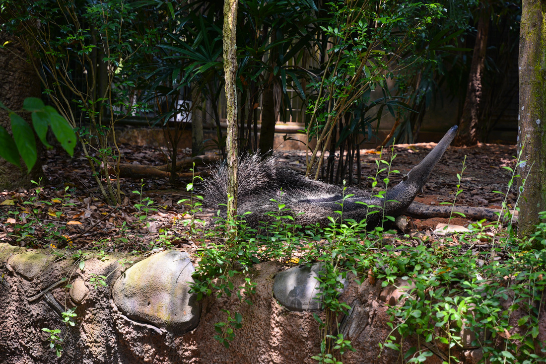 Singapore-zoo-(9)