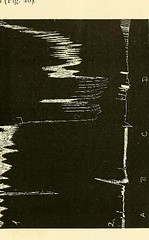 This image is taken from Page 185 of The physiology and pathology of the cerebral circulation; an experimental research