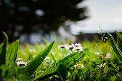 En attendant que la nature se réveille - Photo of La Haye-du-Puits