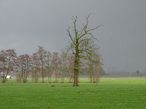 early spring showers | Sandebuur nl