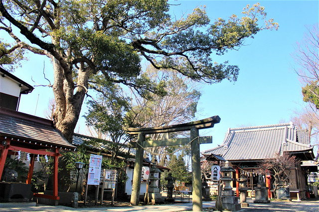 ryugasakiyasaka035