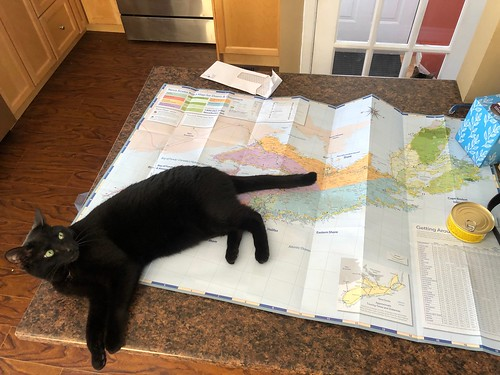 Martha #cat with Nova Scotia map