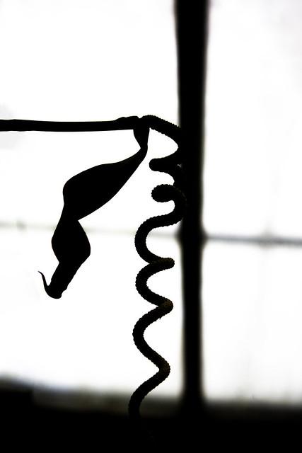 Black Snake Crawling Up The Window
